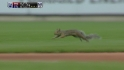 Squirrel loose on field
