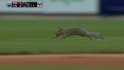 St. Louis Squirrel Scrams