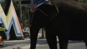 Elephant a hit in Miami