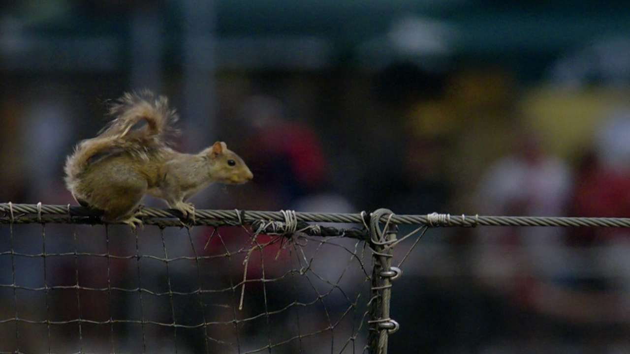 Squirrel on the loose in Philly