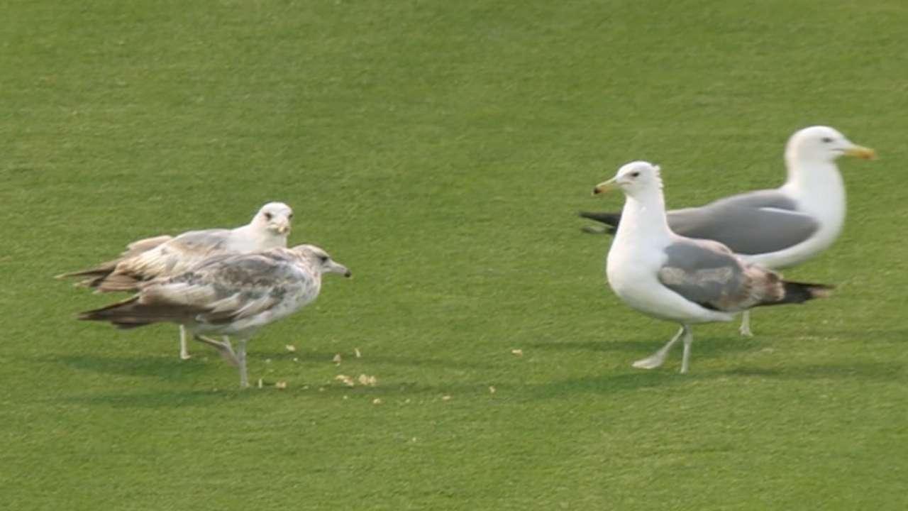 Birds take over in Oakland