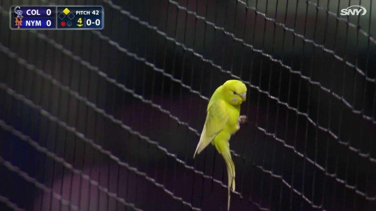 Cespedes attracts neon bird
