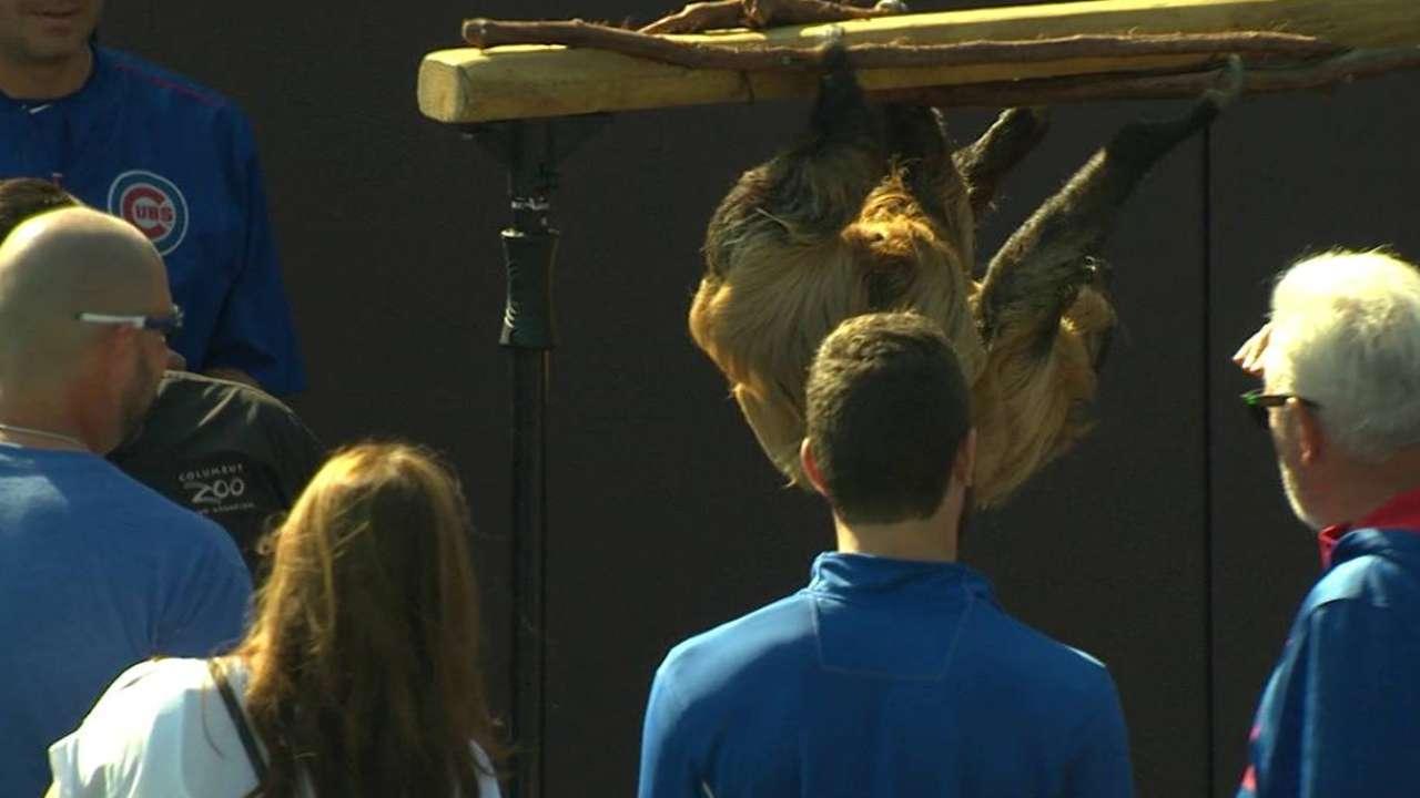 Maddon brings zoo to Wrigley