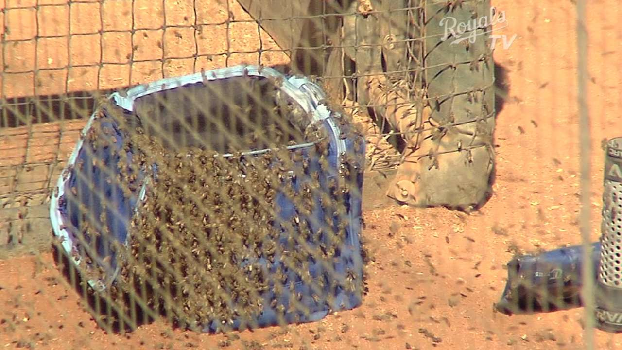 Conservation prompts Yost's concern for bees