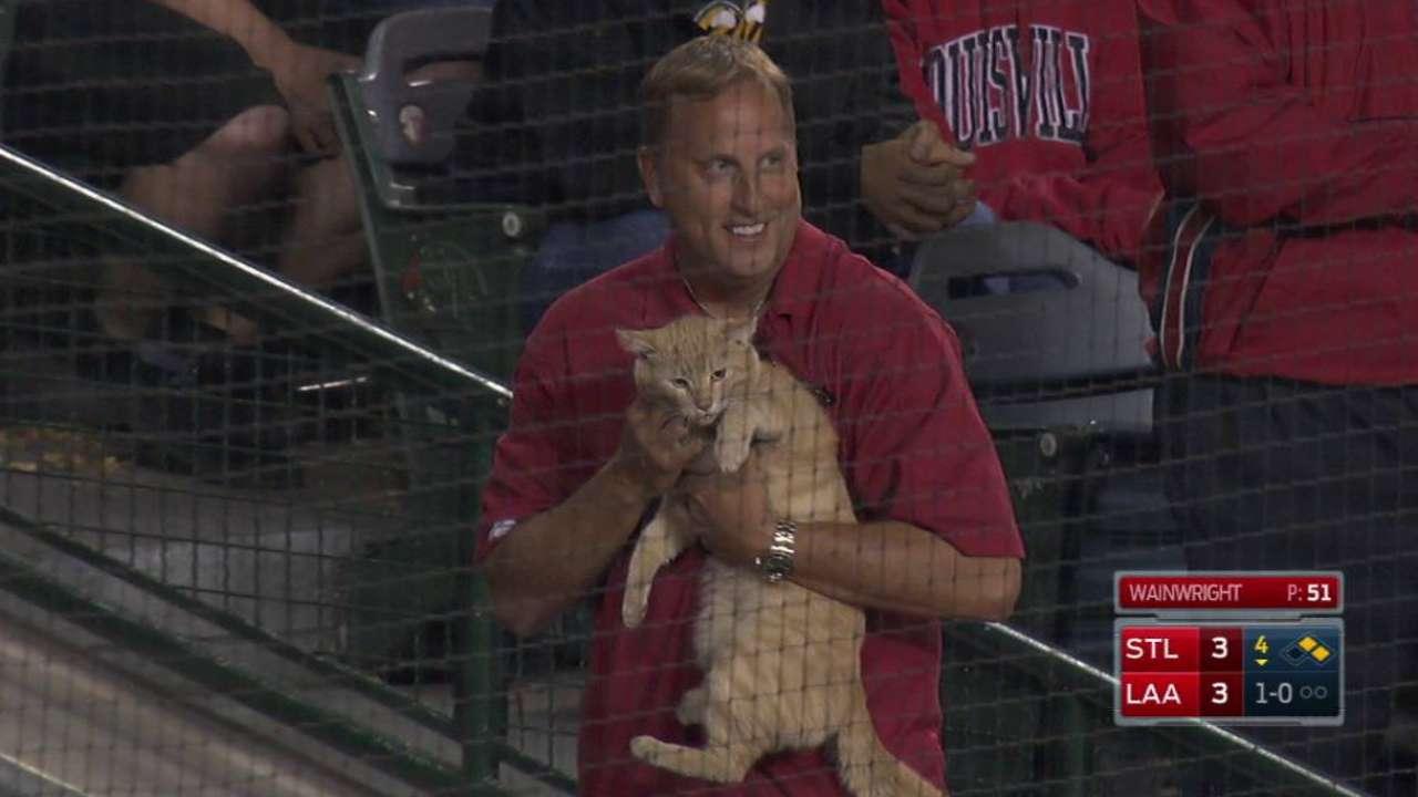 Cat runs around Angel Stadium