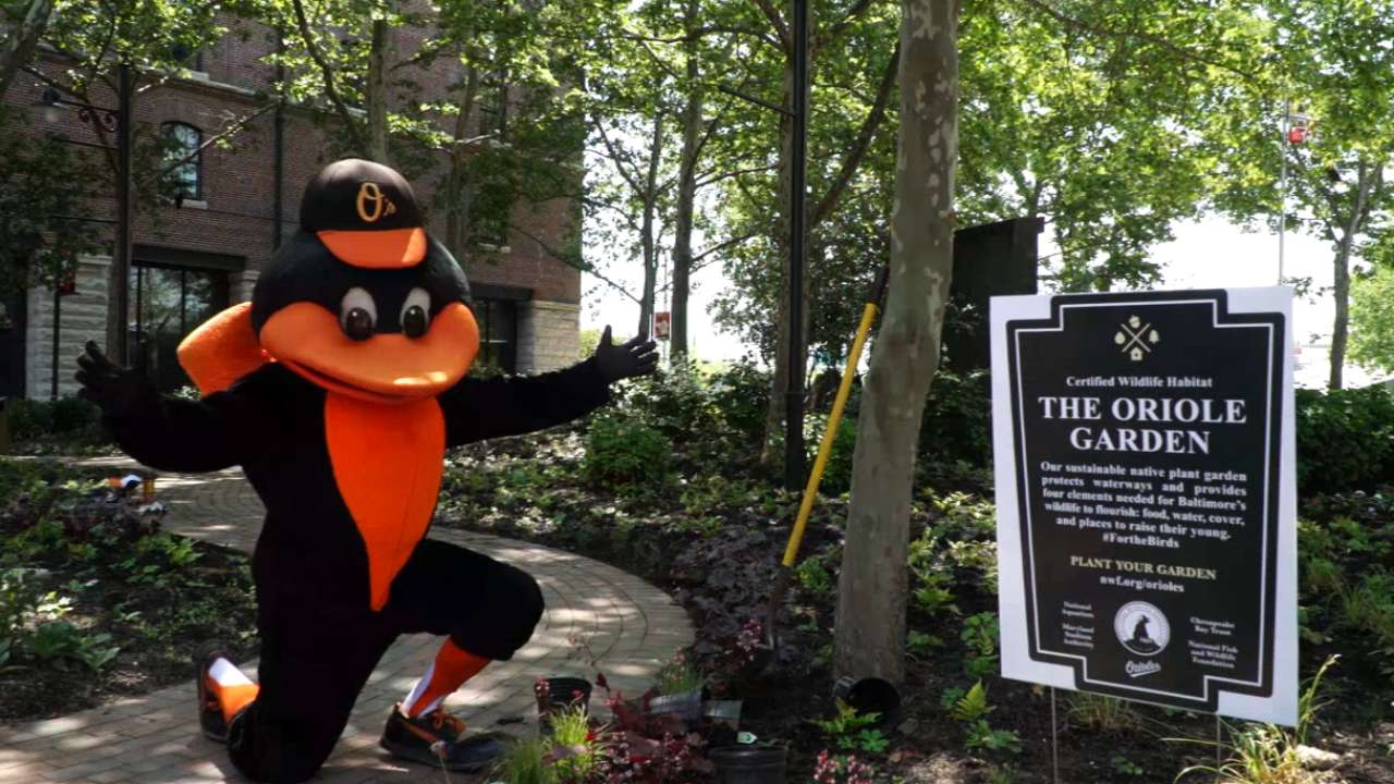 For the birds: Oriole Garden opens with special mission