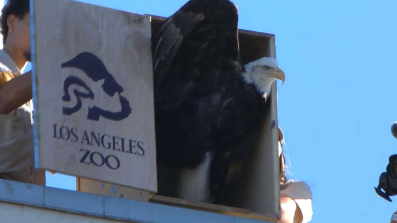 Dodgers welcome two bald eagles