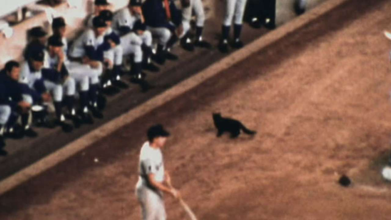 Jenkins on 'Black Cat Game'