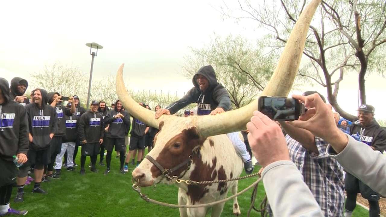 Rookies bring live steer to Rockies camp