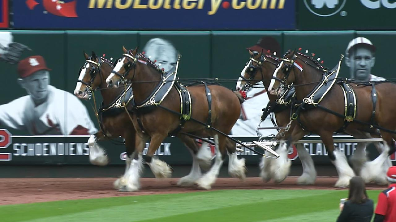 Clydesdales prep for Opening Day