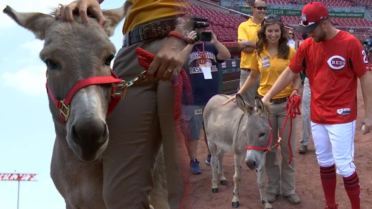 Donkey business: Cozart gets sneak preview