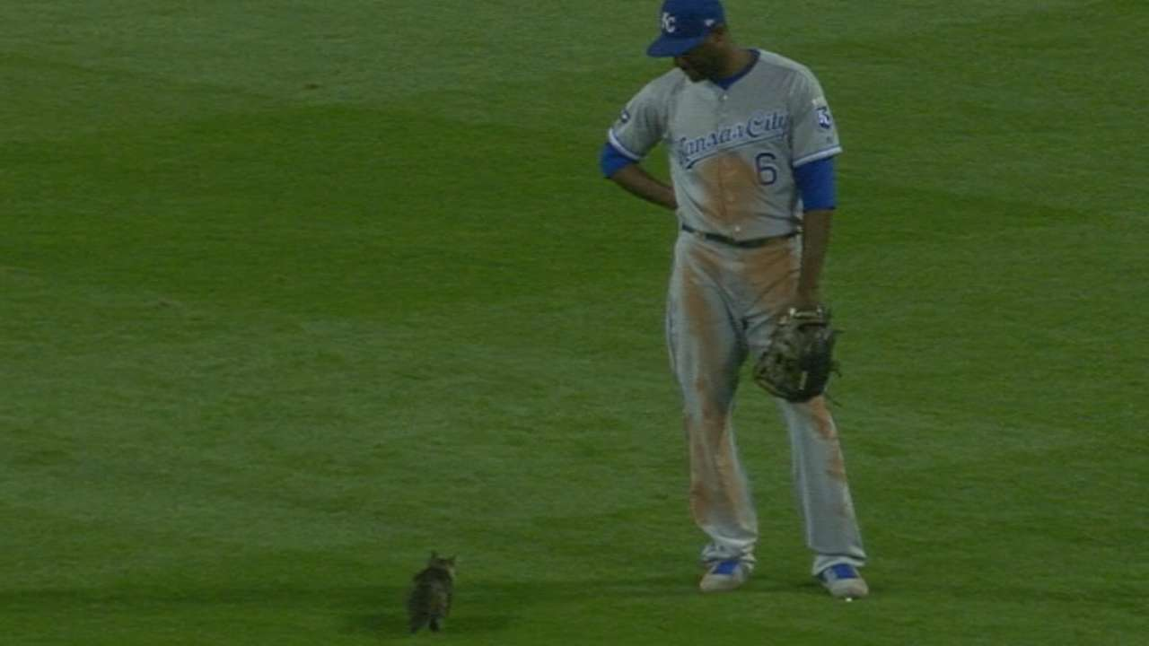 Cards graced by a rally kitten