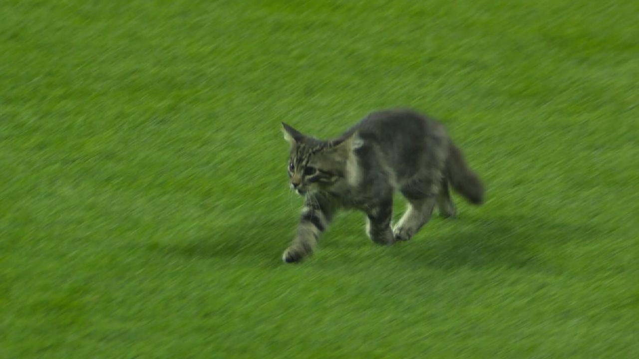 Fowler discusses Rally Cat