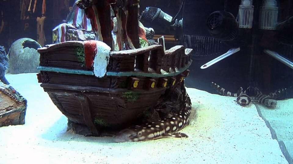 Pirates' bullpen adds shark tank