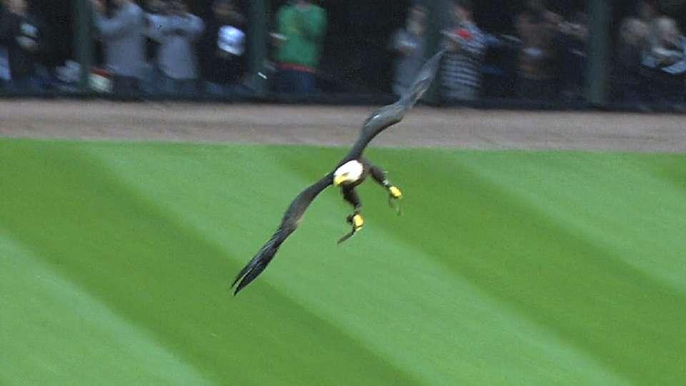 Bald eagle soars to the mound
