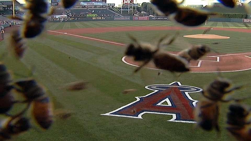 Bees invade Anaheim