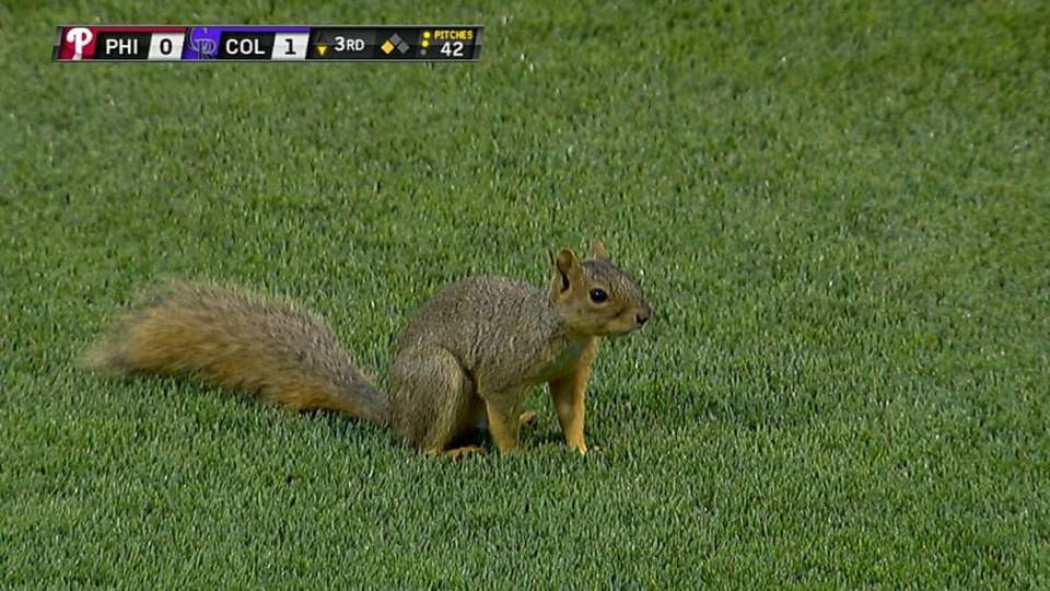 Squirrel on field stops play