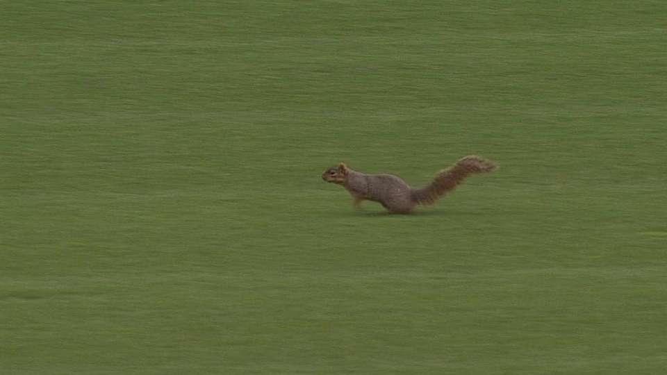 Squirrel runs around on field