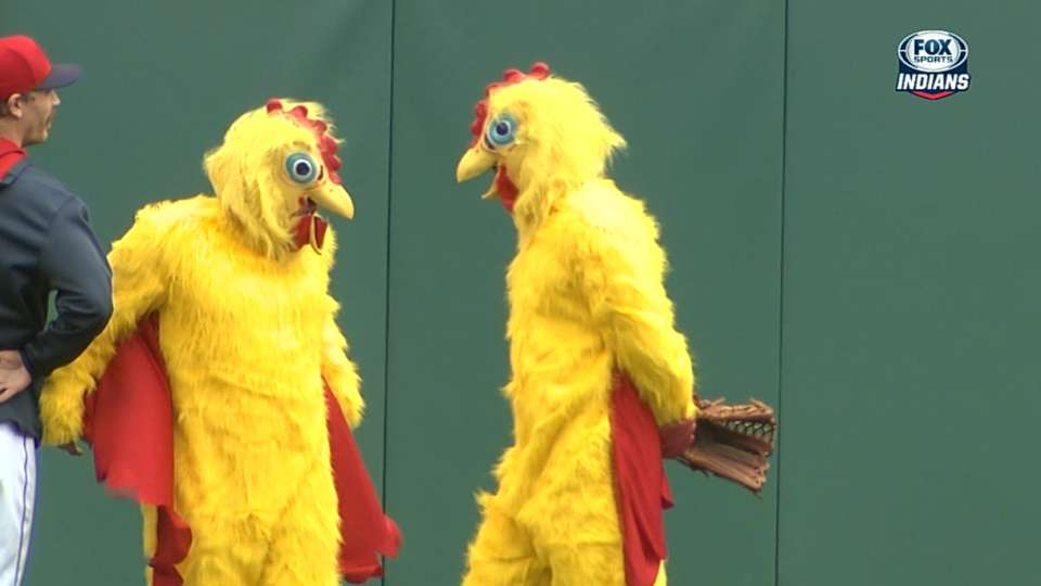 Rally chickens make 2014 debut