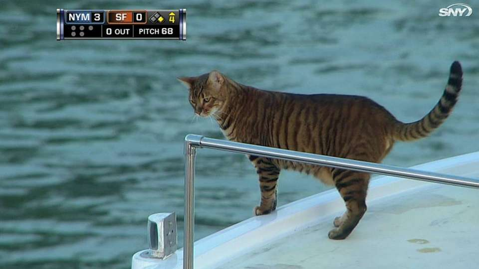 Cat on a boat in McCovey Cove