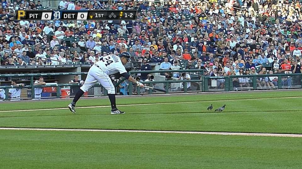 Birds briefly interrupt play