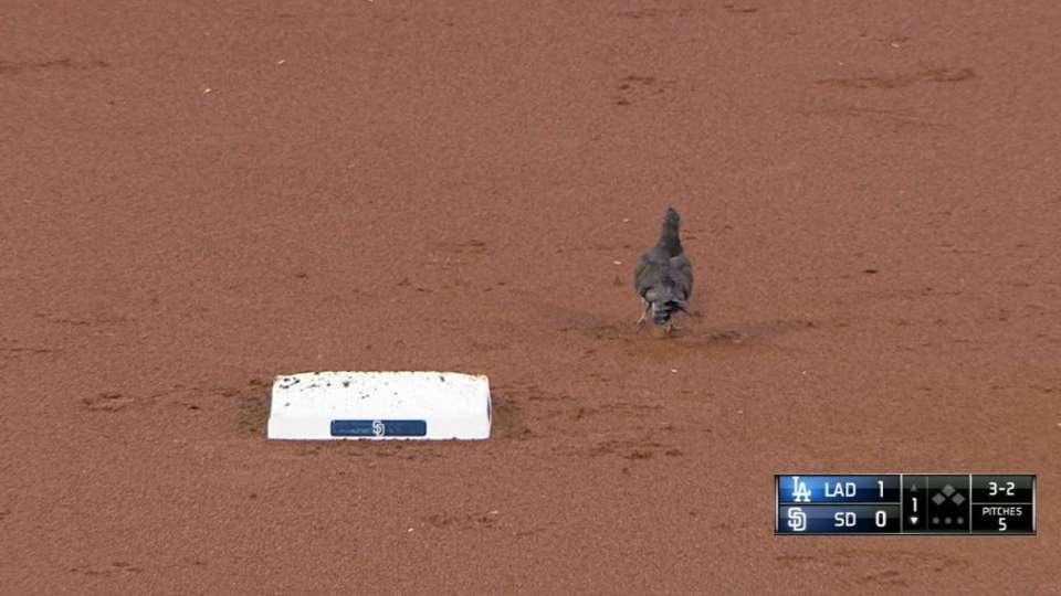 Bird flops around the bases