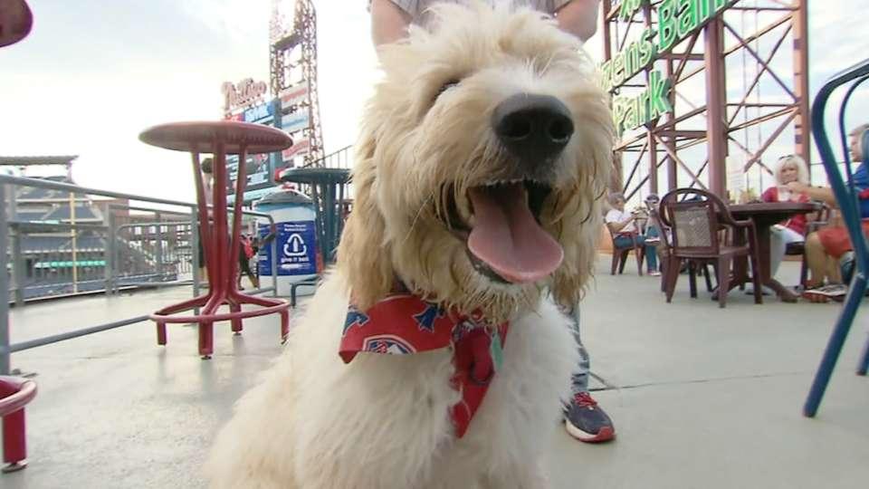 Fans enjoy Bark in the Park