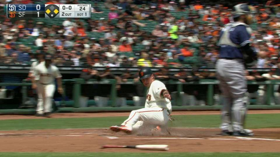 Crawford's sac fly