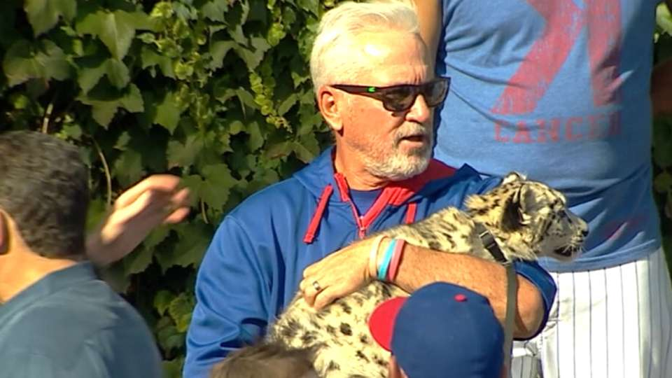 Maddon voted 2015 NL MOY