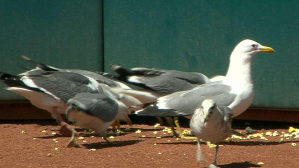 Popcorn rains, seagulls flock