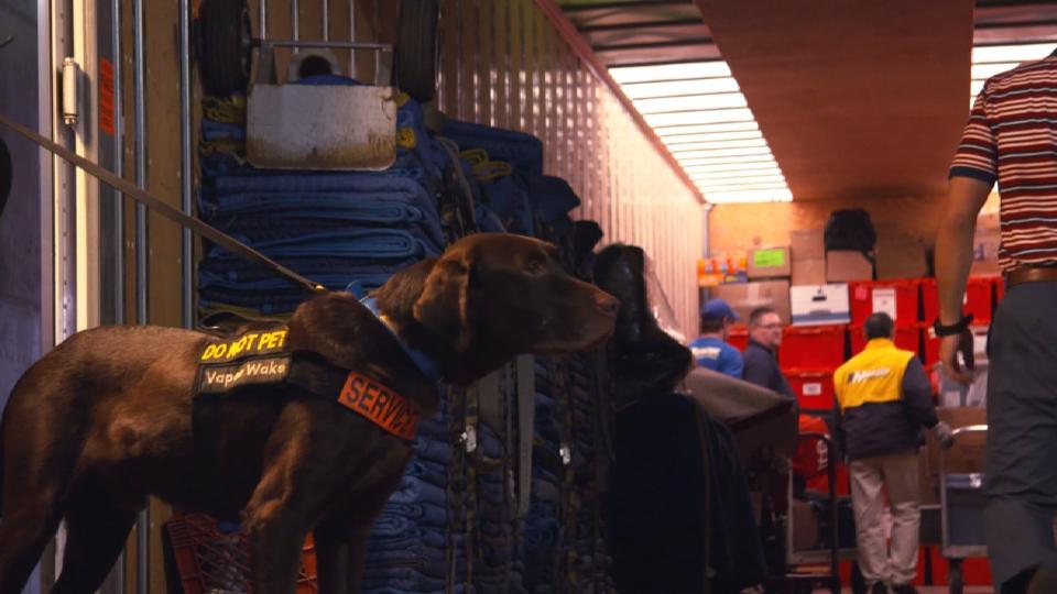 Busch Stadium Security Dogs