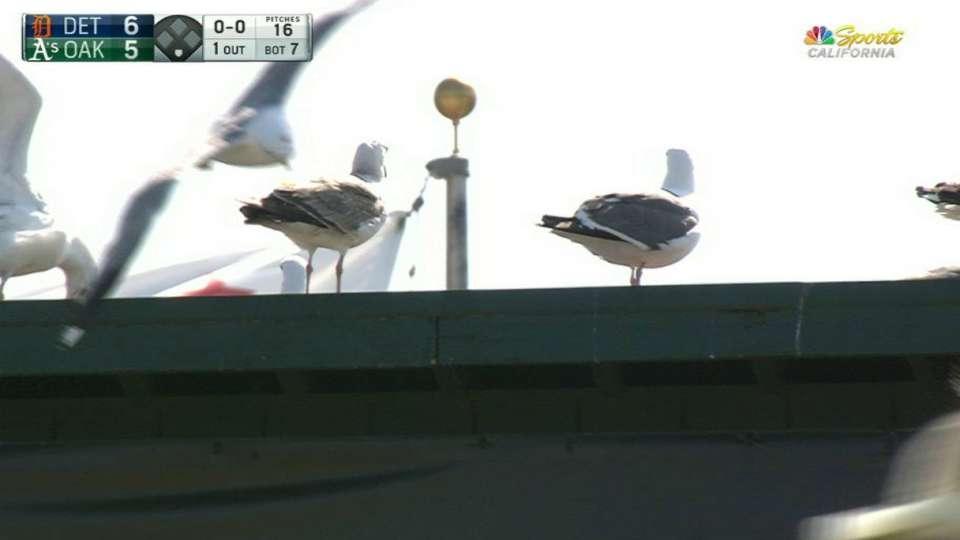 Birds enjoy the game in Oakland