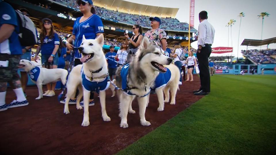 Pups at Dodger Stadium
