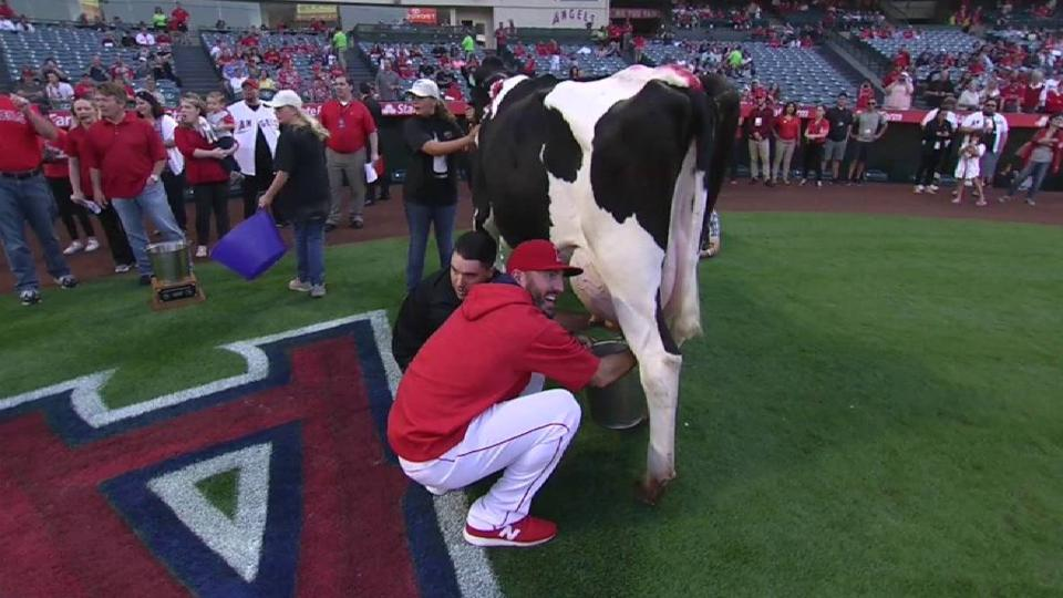 Parker joins in cow milking