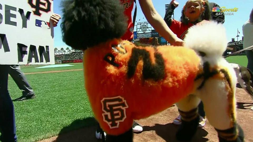 Giants reveal dog costume winner