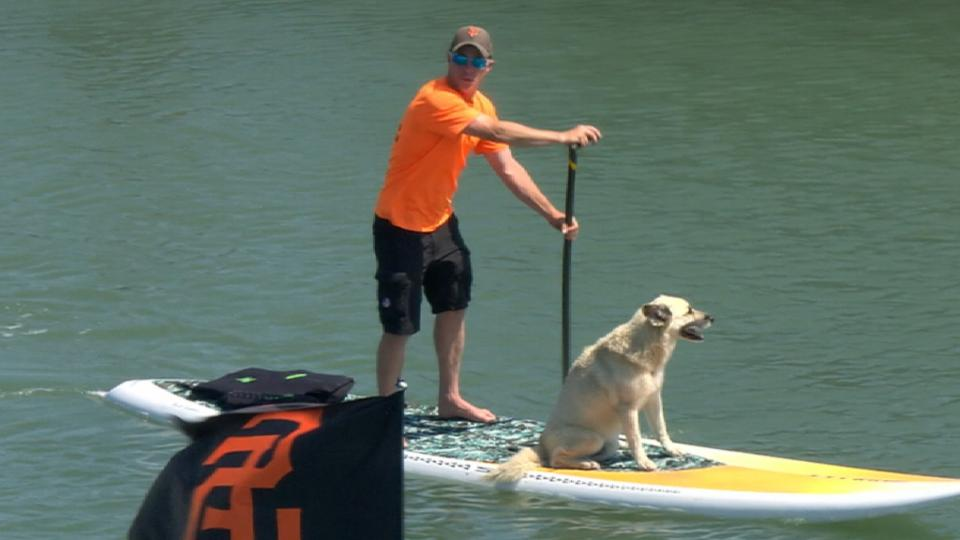 Dog on paddleboard in the Cove